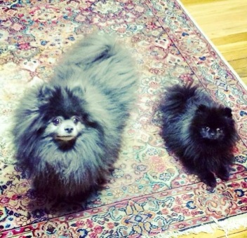 dogs-yum-soap-owners-indigo-wild-cute-furry-love-happiness
